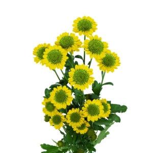 productfotografie bloemen packshot 15 300x300 - Productfotografie